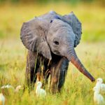 Respect! Baby Elephant With His Bird Friends