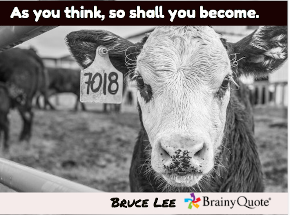 7018 As You Think Bruce Lee BW cow.png
